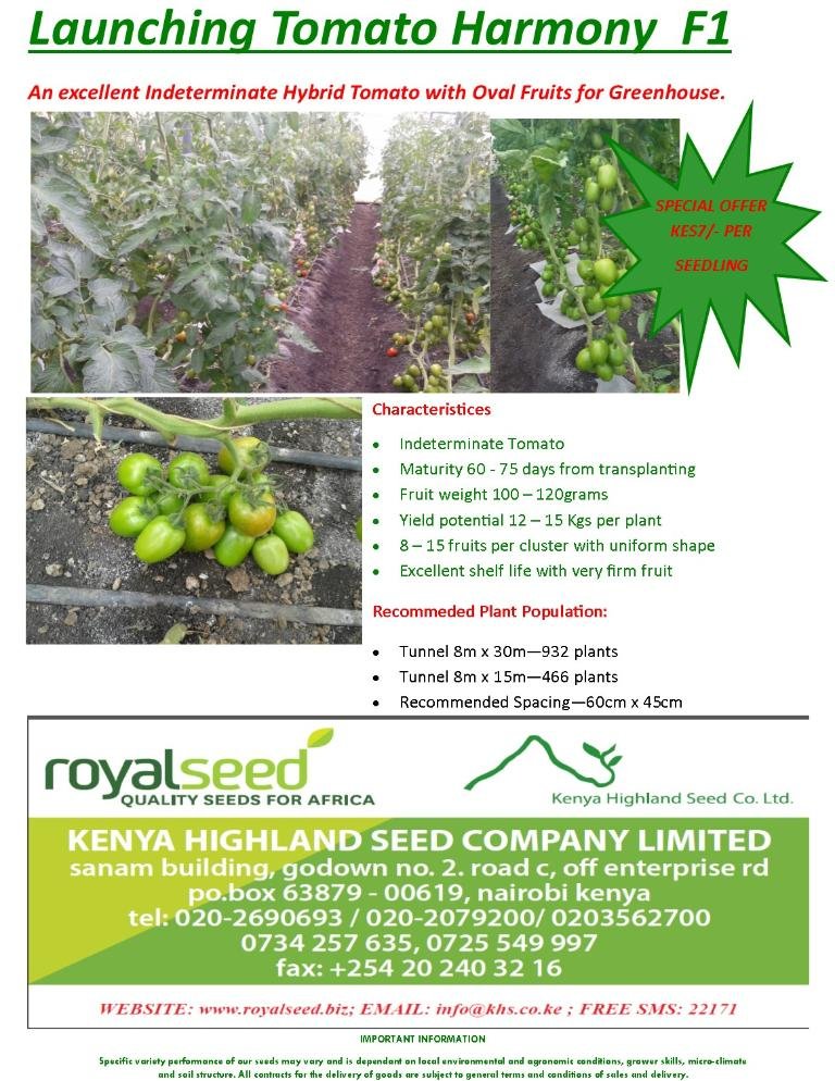 Launching Tomato Harmony F1 from Kenya Highland Seed