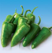 Seeds - Hot Pepper - Export