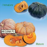 Arjuna F1 pumpkin from Kenya Highland Seeds