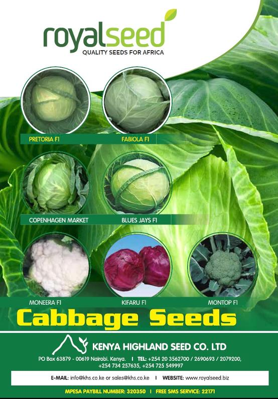 Exceptional range of cabbage seeds from Kenya Highland Seed